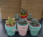 Souvenir Tanaman Kaktus, Lain Dari Yang Lain